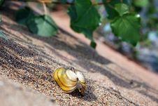 Free Seashell Stock Photography - 32270282