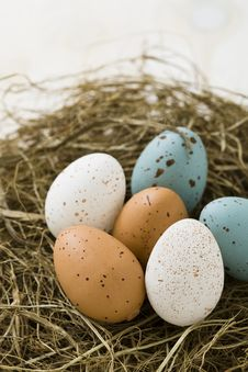 Free Easter Eggs In Nest Stock Photography - 32275242