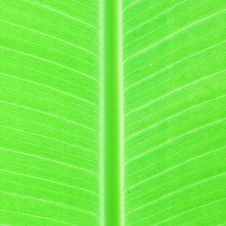 Free Leaf Stock Photography - 32279802