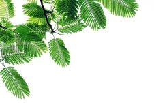 Free Leaf Stock Photo - 32279860
