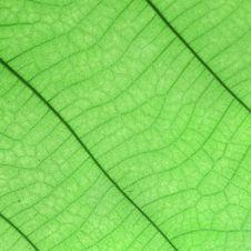 Free Leaf Stock Images - 32280144