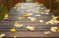 Free Autumn Maple Leaves On A Bridge Royalty Free Stock Photography - 32284227