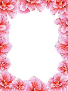 Hand-drawn Pink Hibiscus Frame Royalty Free Stock Photos