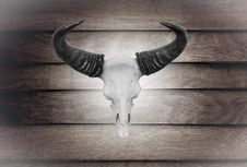 Free Closeup Skull Cow On Wooden Wall Royalty Free Stock Images - 32292219