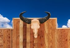 Free Skull Cow Hung On Wall Stock Photos - 32293533