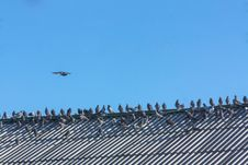 Free Doves In A Row On Rooftop Stock Photos - 32294663