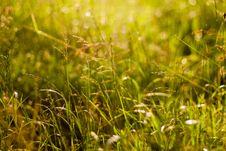 Free Fresh Summer Green Grass Stock Image - 32294931
