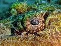 Free Crocodile Fish: Eye Royalty Free Stock Image - 3231476