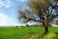 Free Lonely Tree - Springtime Royalty Free Stock Photography - 3232157