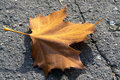 Free Red Leaf Stock Photography - 3232182
