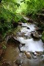 Free Woodland Stream Royalty Free Stock Photo - 3238745