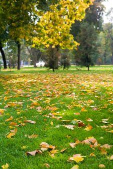 Free Autumn Stock Image - 3230031