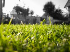 Free Short Green Grass Stock Images - 3231304