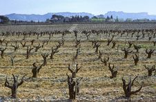 Free Provence Vine Royalty Free Stock Image - 3231566
