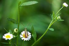 Grasshopper And A Camomile Stock Photo