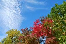 Free Autumn Pattern Royalty Free Stock Image - 3231826
