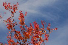 Free Autumn Pattern Royalty Free Stock Images - 3231829