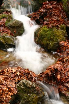 Free Forest Stream Stock Image - 3235511