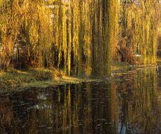 Free Autumn Royalty Free Stock Photo - 3235555