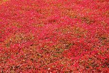 Free Autumn Carpet Royalty Free Stock Image - 3235566