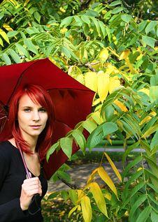 Free Autumn Stock Photo - 3235620