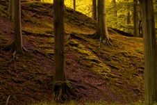 Free Autumn In The Forest Stock Photo - 3236000