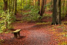 Free Autumn In The Forest Royalty Free Stock Photos - 3236108