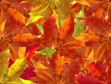 Free Autumn Leaves Background Stock Photo - 3238310