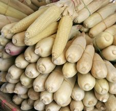 Free Corn Royalty Free Stock Image - 3239716