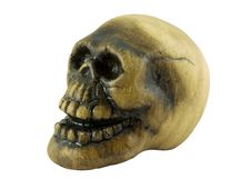 Free Skull Stock Photos - 3239723