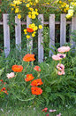 Free Orange Poppies And Yellow Roses Stock Images - 32303984