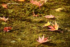 Free Fall Leaves Stock Image - 32300961