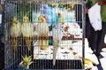 Free Parrots Royalty Free Stock Photos - 32316798