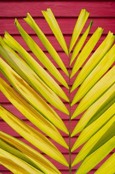 Free Petal Palm Leaf On Blur Colorful Deep Wall Background Stock Image - 32329031