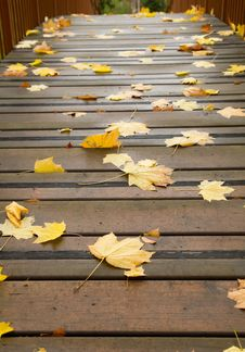 Maple Leaves On A  Bridge Royalty Free Stock Photography