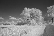 Monochrome Of Summerfields Royalty Free Stock Photos