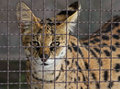 Free Cat Stock Photo - 32344130