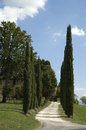 Free Italian Lane With Cypresses Stock Images - 32349334