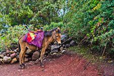 Free Mule In Ethiopia Stock Images - 32345264
