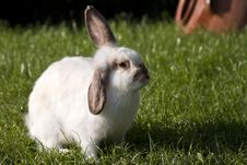 Free White Rabbit On The Grass Stock Photo - 32346140