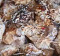 Free Background Of Seashells Photographed Close-up. Royalty Free Stock Photography - 32354397