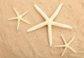 Free Three Starfishes Is Located On Sandy Background Royalty Free Stock Photo - 32354605