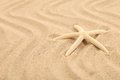 Free One Starfish Is Located On Sandy Background Royalty Free Stock Photos - 32354608