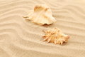 Free Two Shells Is Located On Sandy Background Stock Photo - 32354650