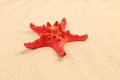 Free One Red Starfish Is Located On Sandy Background Royalty Free Stock Image - 32354656