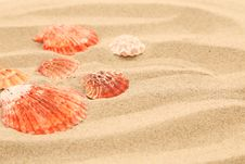 Free Lot Of Shells Is Located On Sandy Background Royalty Free Stock Image - 32354716