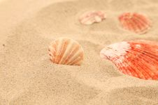 Free Lot Of Shells Is Located On Sandy Background Stock Photos - 32354723