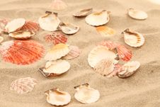 Free Lot Of Shells Is Located On Sandy Background Royalty Free Stock Photography - 32354757
