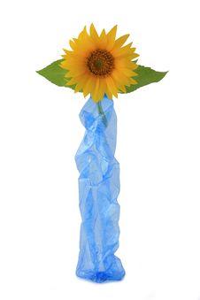 Free Sunflower Stock Photos - 32357173