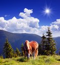 Free Horse In The Mountains Royalty Free Stock Photography - 32368257